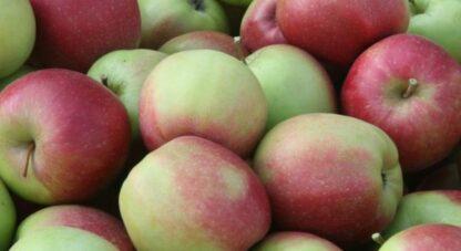 Яблуко Ліголь, кг
